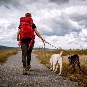 Aire Libre, Jardín y Mascotas